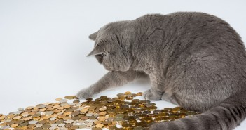 cat pawing at pennies