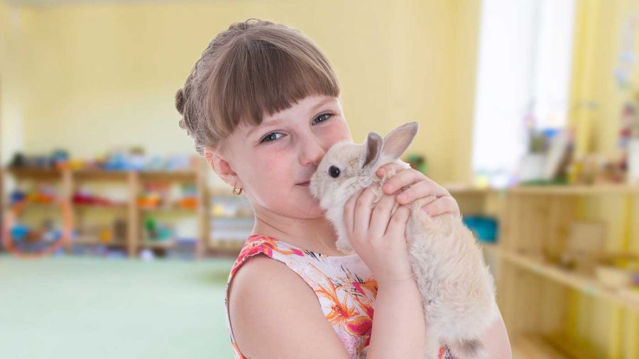 girl holding pet rabbit in a classroom