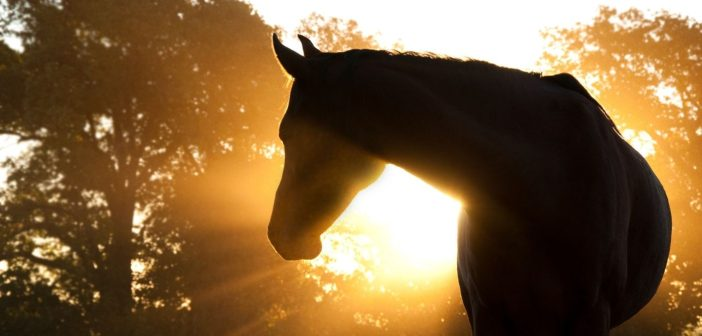 5 Common Health Problems That Horses Face