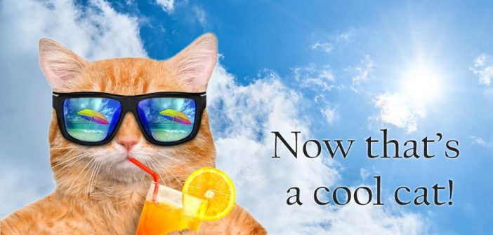 cool cat wearing sunglasses and sipping a summer drink at the beach