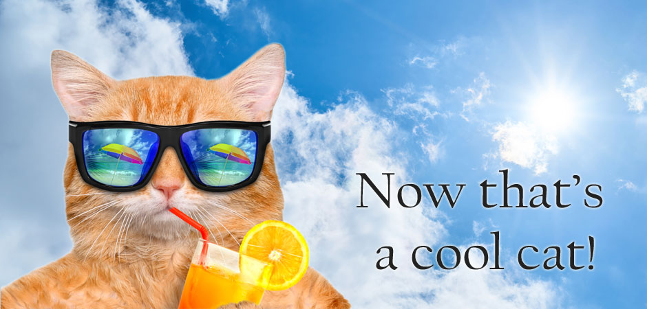 Keeping Cats Cool In The Summer Heat - PetsBlogs