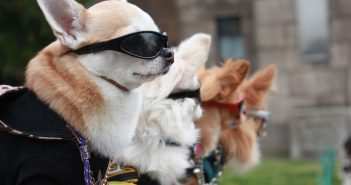 line of dogs wearing cool sunglasses and dog clothes
