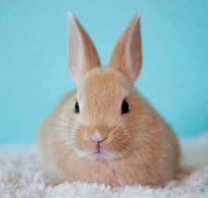 cute little bunny rabbit