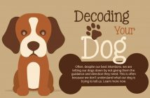 decoding your dog banner