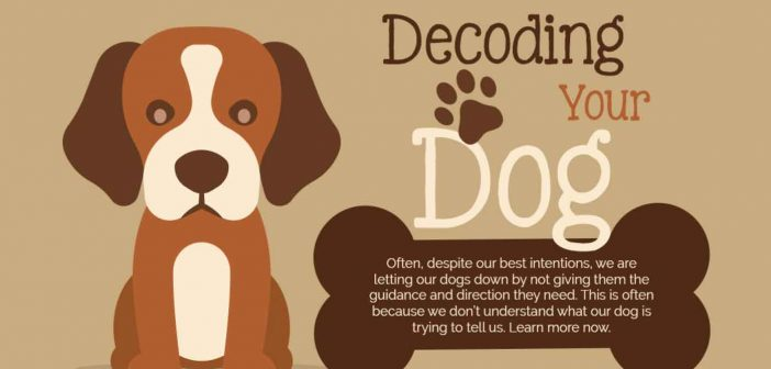 Decoding Your Dog (Infographic)