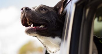 The Complete Guide to the Perfect Pet-Friendly Road Trip