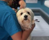 Opening a Vet Clinic: 7 Tips to Help You Prepare