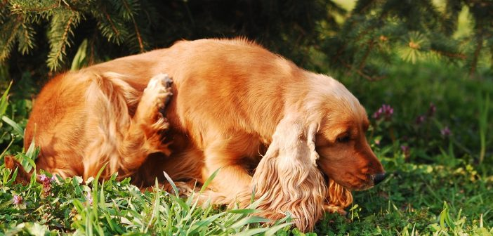 Finding The Perfect Relief For Your Dog's Itchy Skin
