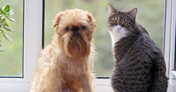 cat and dog sitting on the window seat