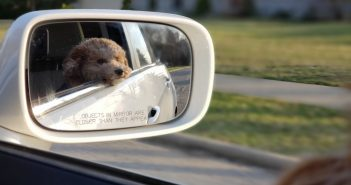Training Your Dog to Enjoy a Hassle-Free Car Ride