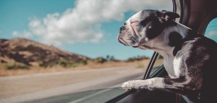 Why Owning a Dog Is Great for Your Health