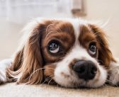 Top Tips for Removing Dog Urine Smell from Carpet