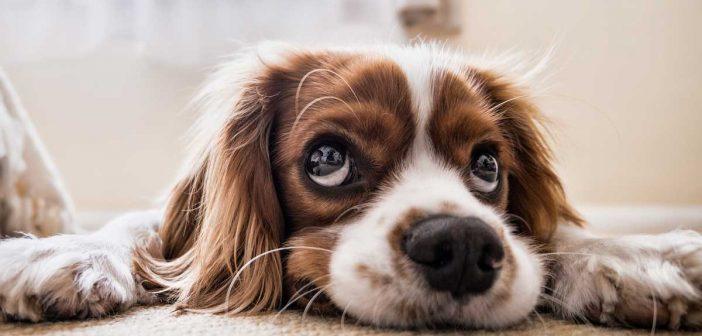 dog laying on carpet