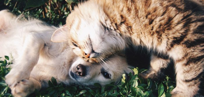 dog and cat friends laying in the grass
