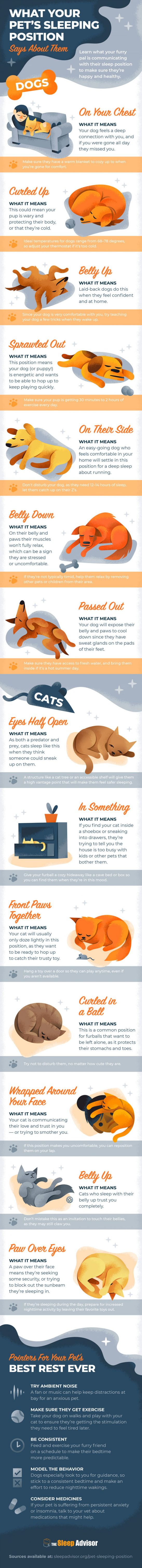 infographic about dog and cat sleeping positions