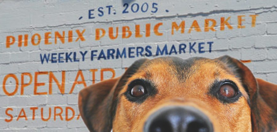 dog in front of phoenix open air market