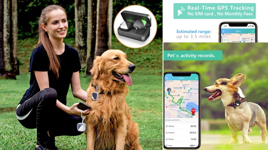 photos of a gps pet tracker and smart phone