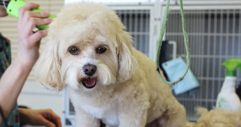dog groomer grooming a dog