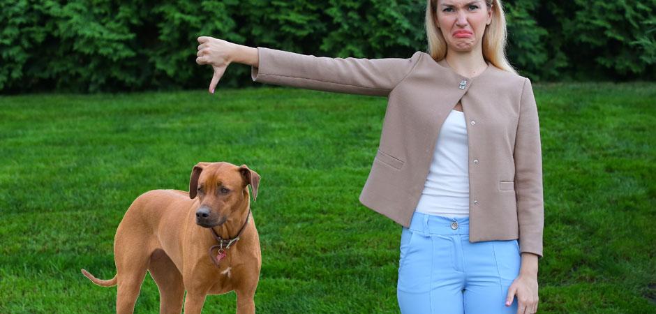 People Who Don't Like Dogs - PetsBlogs