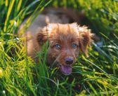 Caring for a Dog with Allergies
