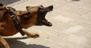 dog on leash showing aggression