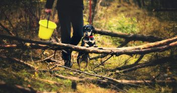 Protect your trees from your dog