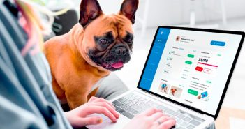 dog watching a person type on a laptop