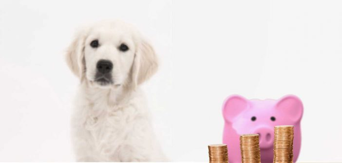dog and piggy bank behind a stack of pennies