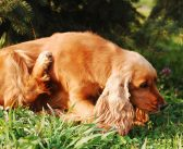 What's The Best Ways to Get Rid of Fleas?