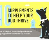 10 Common Dog Supplements (Infographic)