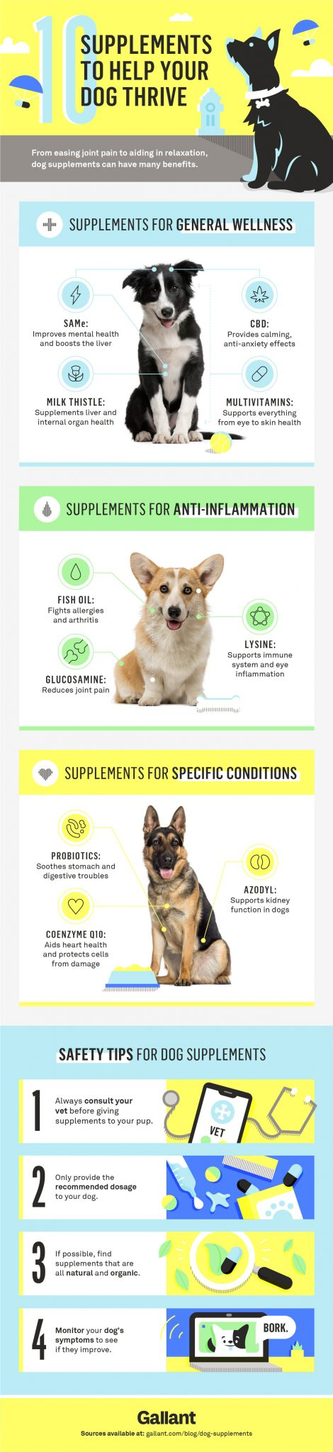 10 supplements to help your dog thrive infographic