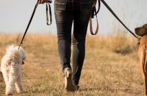 a man with two dogs on leashes walking away in a field