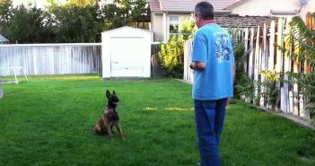 man training a german sheppherd