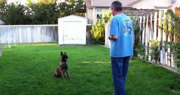 man training a german sheppherd
