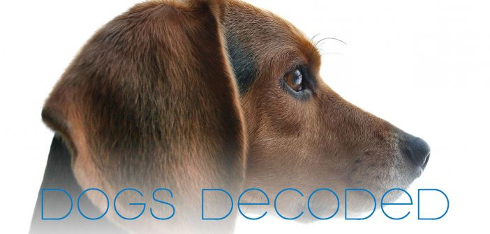 dogs decoded understanding the human-dog relationship title over dog head profile background
