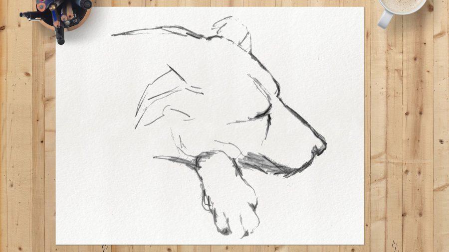 dog face sketch