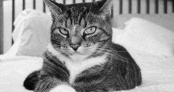 beautiful, fierce, stoic cat in black and white