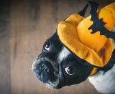Dress Up Your Pet with Frightfully Fun New PetSmart® Halloween Costumes