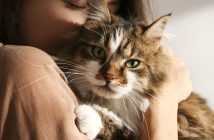 What You Must Consider Before Getting a Pet