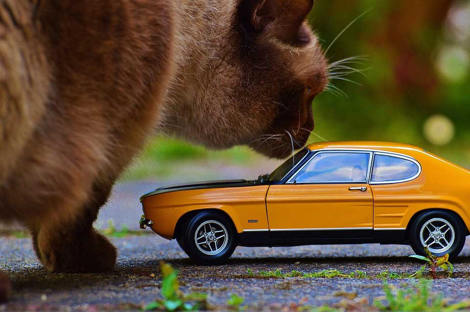 cat sniffing a miniature toy car