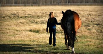 a girl leading her horse through a pasture