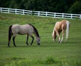 5 Common Health Issues in Horses
