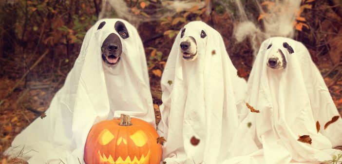 3 dogs dressed as ghosts for halloween