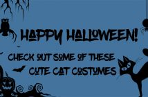 happy halloween cat costumes silhouette
