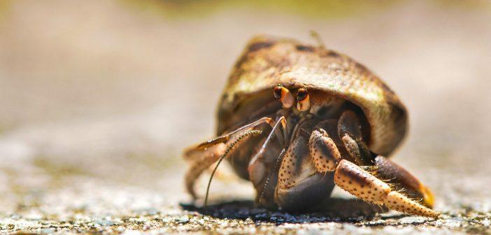 cute little hermit crab