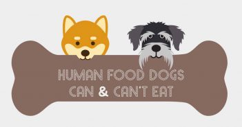 graphic with two dogs and a bone human foods dogs can and can't eat infographic feature