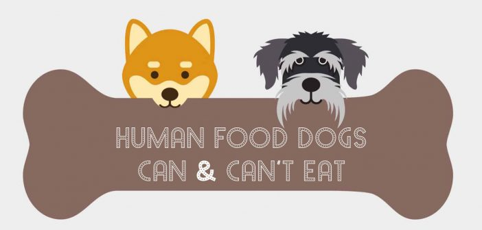 Foods Your Dog Can (and Can NOT) Eat
