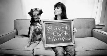 adopt don't shop photo from jusani culture