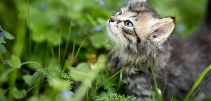 Is Holistic Health Essential for Your Pet?