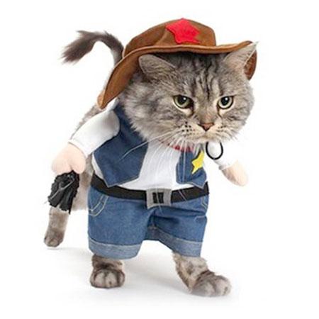 cat in a cowboy costume